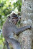 Affe auf dem Baumstamm Stockbild