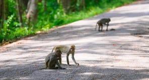 Affe auf dem Boden Lizenzfreies Stockfoto