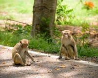 Affe auf dem Boden Lizenzfreie Stockfotos