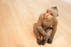 Affe auf dem Boden Stockbilder