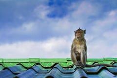 Affe auf dem Dach Lizenzfreies Stockbild