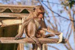 Affe auf dem Dach Stockfoto