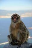 Affe auf dem Felsen Lizenzfreie Stockbilder