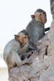 Affe auf dem Felsen Stockbilder