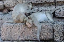 Affe auf dem Felsen Lizenzfreies Stockfoto