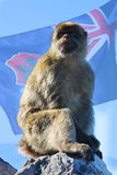 Affe auf dem Felsen Lizenzfreie Stockfotografie