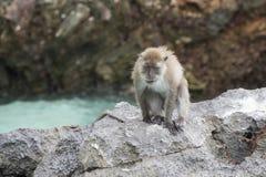 Affe auf dem Felsen Einsamer Affe Lizenzfreies Stockfoto