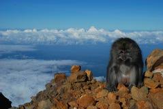 Affe auf dem Höchst-Rinjani-Berg lizenzfreie stockfotos
