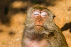 Affe auf dem Insel Ko Lan Stockfoto