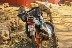 Affe auf dem Motorrad Lizenzfreies Stockfoto