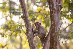 Affe auf dem Sitzung Stockbilder