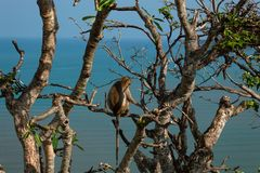 Affe auf dem Standpunkt Khao Chong Krachok Lizenzfreie Stockfotos