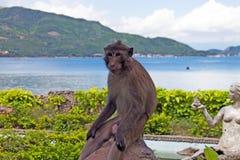 Affe auf dem Stein Lizenzfreie Stockfotografie