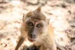 Affe auf dem Strand Lizenzfreies Stockbild