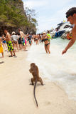 Affe auf dem Strand Stockbild