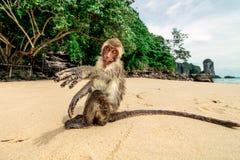 Affe auf dem Strand Lizenzfreie Stockfotos