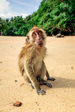 Affe auf dem Strand Lizenzfreie Stockbilder