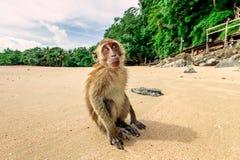 Affe auf dem Strand Lizenzfreie Stockfotografie