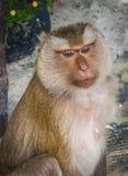 Affe auf dem Thailand-Strand Lizenzfreies Stockfoto