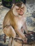 Affe auf dem Thailand-Strand Lizenzfreie Stockbilder