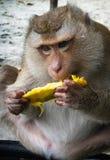 Affe auf dem Thailand-Strand Stockbild