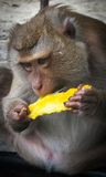 Affe auf dem Thailand-Strand Lizenzfreies Stockbild