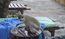 Affe auf dem Tisch in Kenia Stockbilder