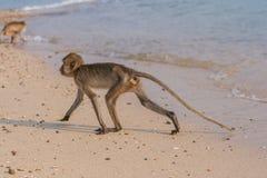 Affe auf dem Ufer Lizenzfreie Stockbilder