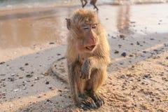 Affe auf dem Ufer Stockbilder