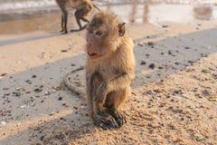 Affe auf dem Ufer Stockfotos