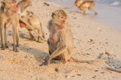 Affe auf dem Ufer Lizenzfreies Stockfoto