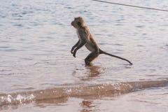 Affe auf dem Ufer Stockbild