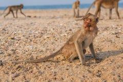 Affe auf dem Ufer Lizenzfreie Stockfotos