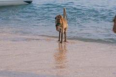 Affe auf dem Ufer Lizenzfreies Stockbild