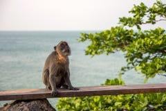 Affe auf der Bank Stockfotografie