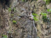 Affe auf der Klippe Lizenzfreie Stockbilder