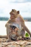 Affe auf der lustigen Nahaufnahme der Felsen Stockfotografie