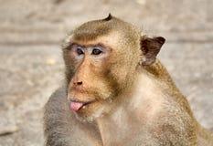 Affe auf der lustigen Nahaufnahme der Felsen thailand Stockfotos