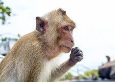 Affe auf der lustigen Nahaufnahme Thailand der Felsen Stockfotos