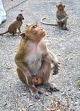 Affe auf der lustigen Nahaufnahme Thailand der Felsen Stockbilder
