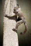 Affe auf der Niederlassung Stockbild