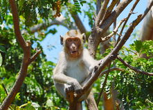 Affe auf der Niederlassung Stockfoto