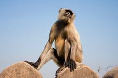 Affe auf der Steinwand Stockbild