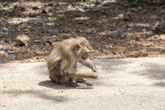 Affe auf der Straße Lizenzfreie Stockfotos