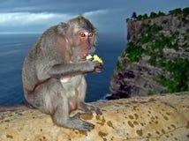 Affe auf der Wand Stockfotos