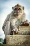 Affe auf der Wand Lizenzfreies Stockfoto