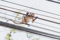 Affe auf Drähten Lizenzfreies Stockbild