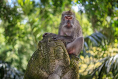 Affe auf einem Affen Lizenzfreies Stockfoto