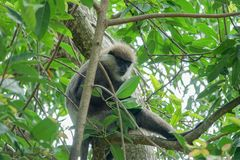 Affe auf einem Baum im Dschungel Lizenzfreies Stockfoto