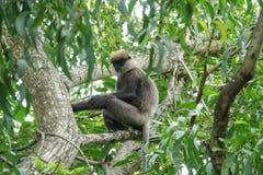 Affe auf einem Baum im Dschungel Lizenzfreies Stockbild